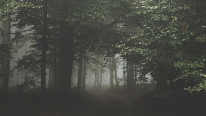 eerie forest